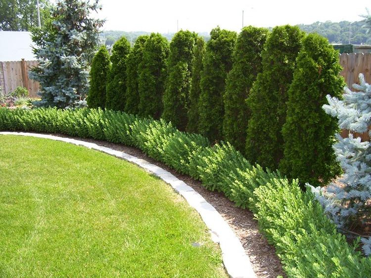 В качестве живой изгороди можно использовать не только решётки с вьюнами, но и высокорослые цветы или кустарникиФОТО: i.pinimg.com
