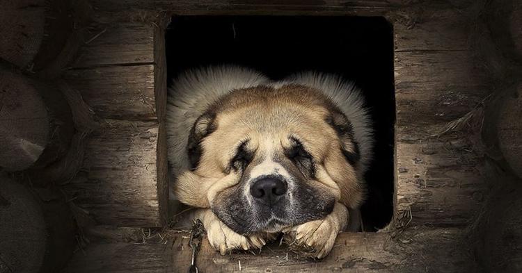 Собакам, которые живут на улице, во дворе или в вольере, будка нужна обязательноФОТО: cs7.pikabu.ru