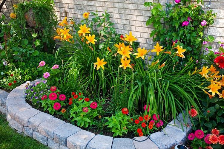 Кроме того, важно правильно расположить растения, чтобы высокие не загораживали низкиеФОТО: avatars.mds.yandex.net