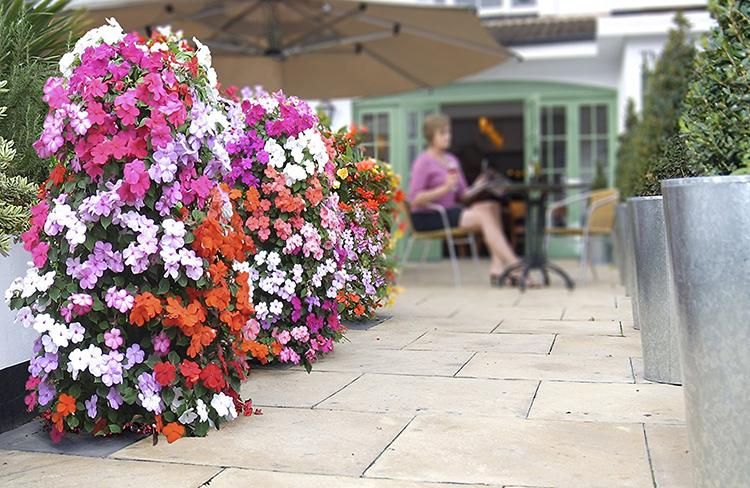 Хорошо смотрятся в таких вазонах ампельные цветыФОТО: forsaleincanada.ca