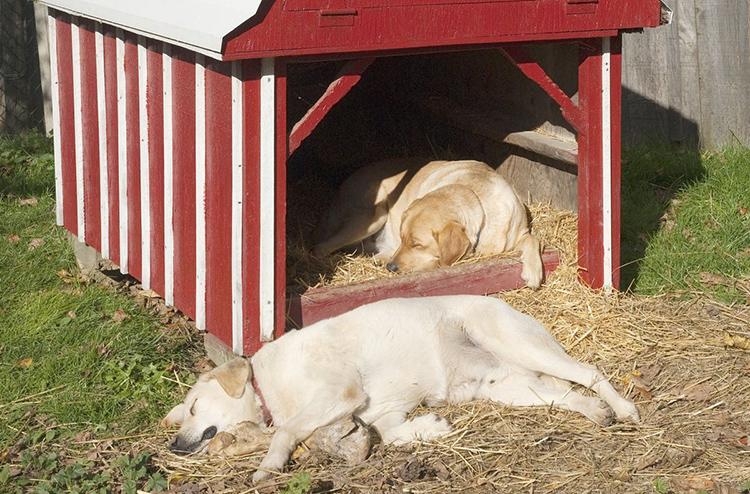 Многие владельцы дворовых псов просто простилают в будке солому, которую можно легко поменять при обработкеФОТО: news.hitsad.ru