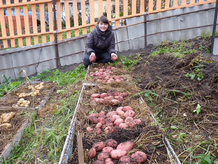 Практики отмечают, что высокие грядки повышают урожайностьФОТО: sianie1.ru.