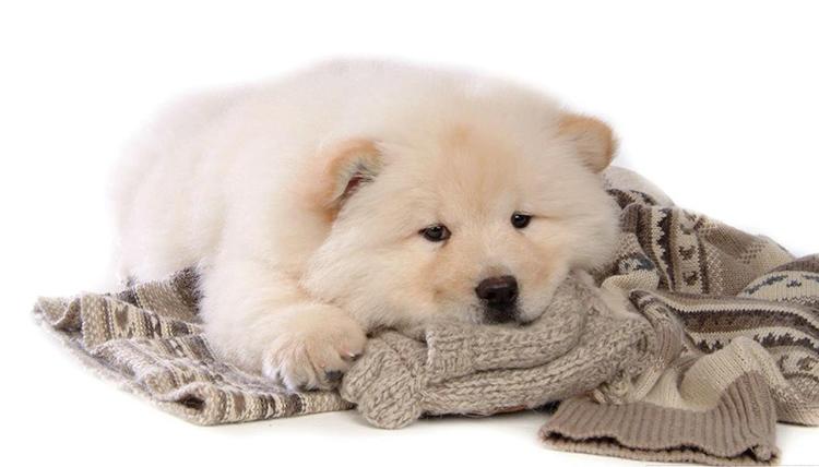 Если используете для лежанки свой старый свитер или какую-то другую вещь, которая пахнет вами, ей это безумно понравится. И даже если вас не будет дома, пёс не будет чувствовать себя одинокоФОТО: images2.fanpop.com