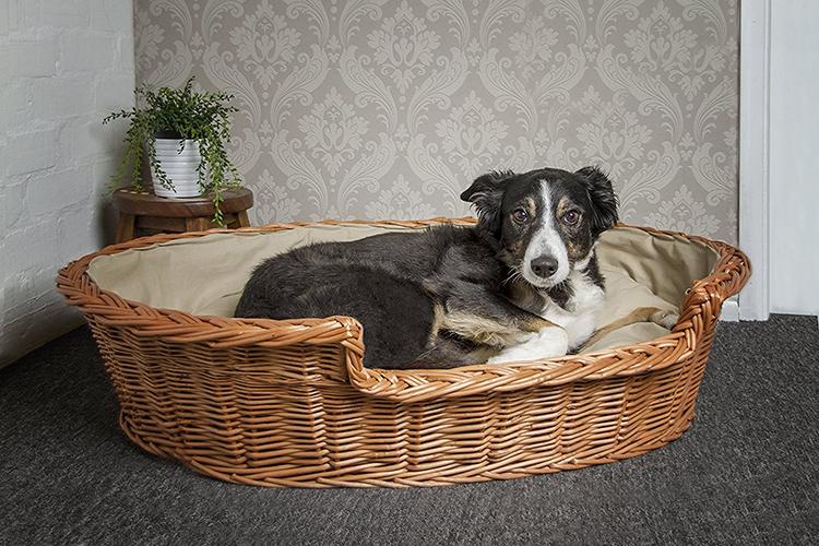 Для средней породы можно предложить лежанку-корзину. Небольшой бортик ограничит пространство, позволит собаке уютно устроиться и, положив мордочку на возвышении, следить за вамиФОТО: korrectkritters.com