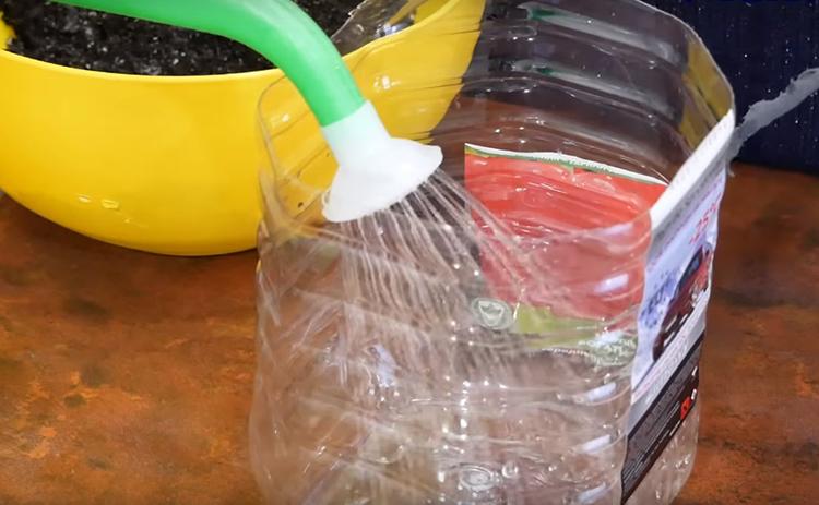 В ёмкость поддона нужно залить воду для полива. Не жалейте воды, с этой системой её никогда не будет слишком много. Вам придётся долить её спустя два-три месяца, когда вспомните о своём питомце. А чтобы вода не испортилась в практически герметичной конструкции, бросьте на дно серебряную монетку. Удивительный факт, но серебро всегда работает