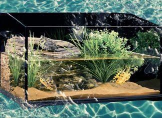 Потрясающее украшение интерьера живой природой: аквамир своими руками