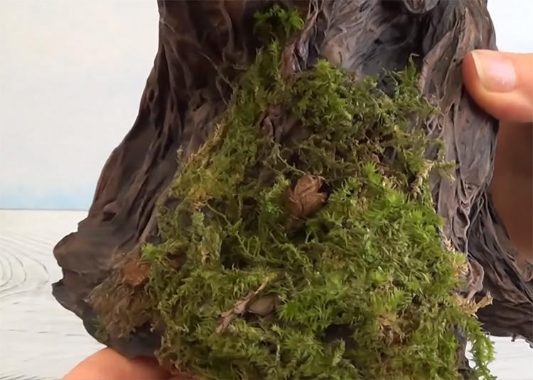Декорируйте готовый пенек кусочками настоящего или искусственного мха, листьями, шишками и тонкими веточками