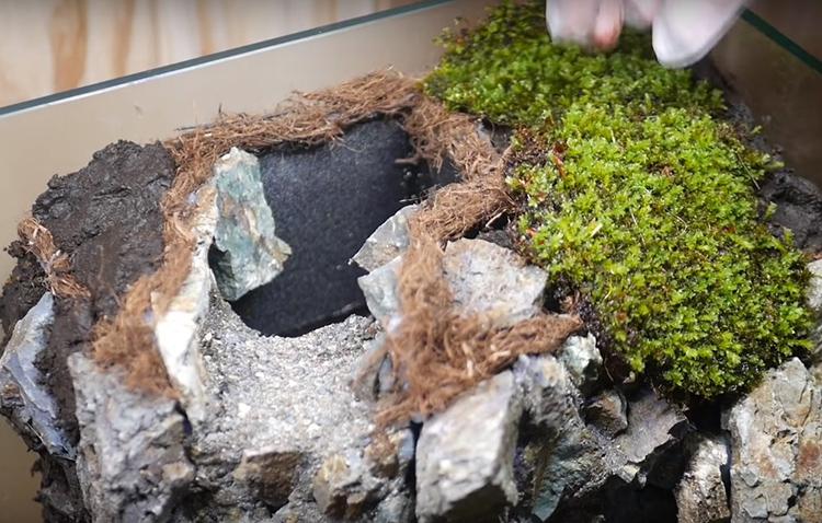 Этот грунт станет основой для питания растений. Вы можете использовать мхи, лишайники или растения, которые хорошо чувствуют себя во влажном климате, например аспарагус перистый