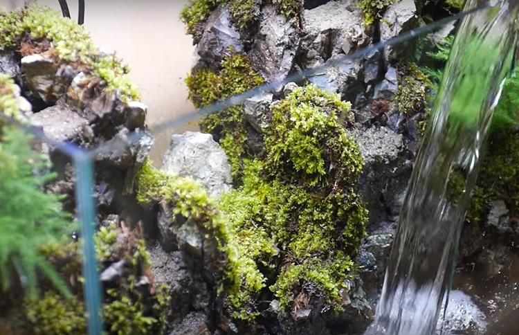Со временем мхи освоятся на новом месте, начнут расти и станут выглядеть очень естественно
