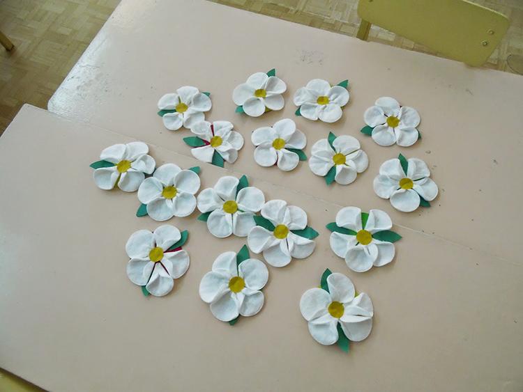еда приколы цветы из ватных дисков своими руками картинки уход комнатным кленом