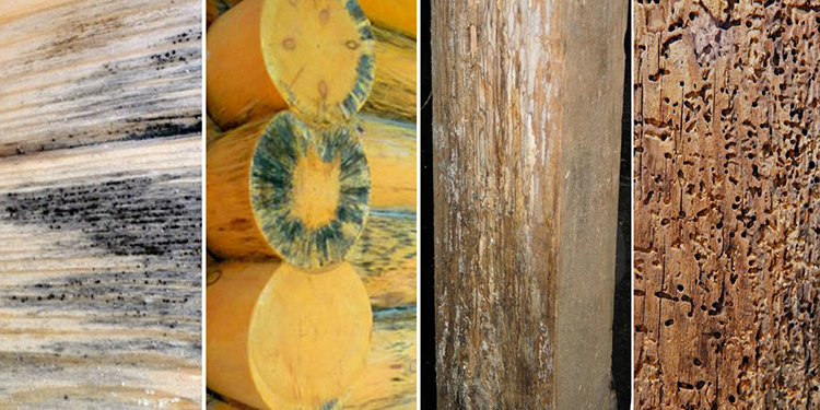 Неправильный подбор пропитки в дальнейшем только усугубит разрушение древесины