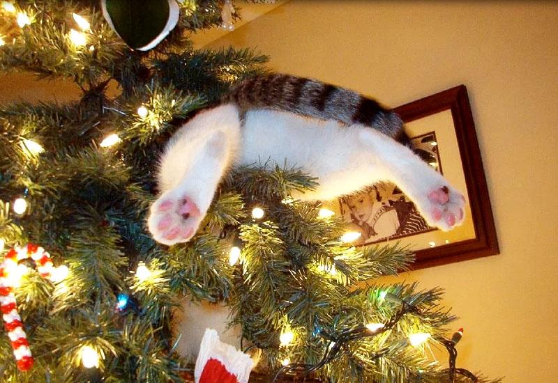 Как защитить новогоднюю елку от проблем