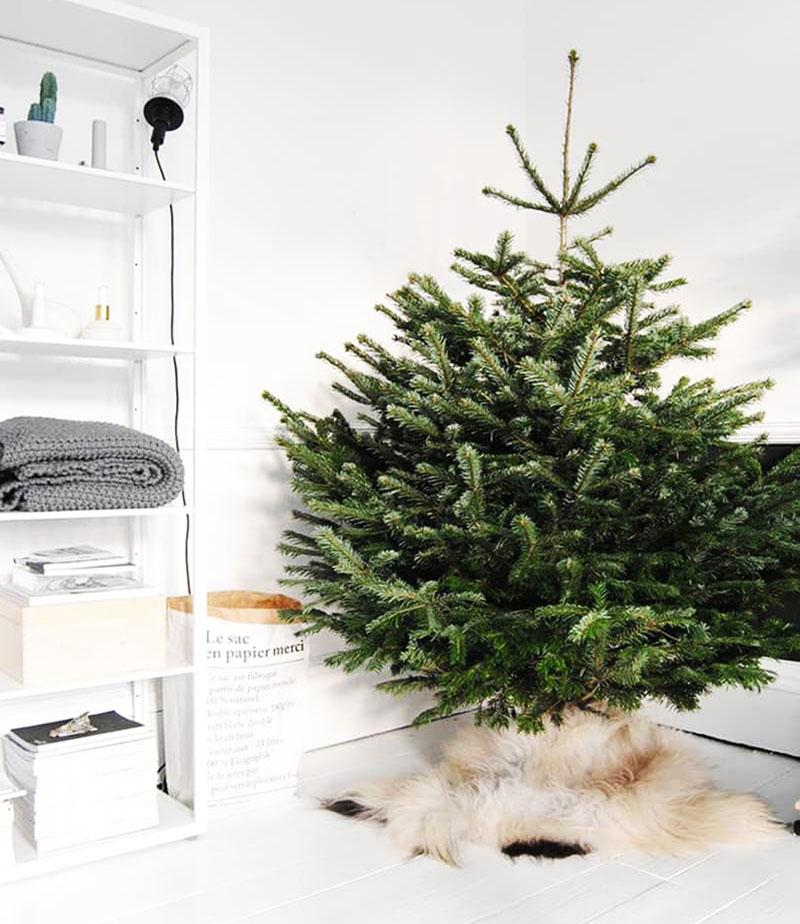 Кошка привыкнет к новогодней красавице за пару-тройку дней, после этого можно приступать к украшению