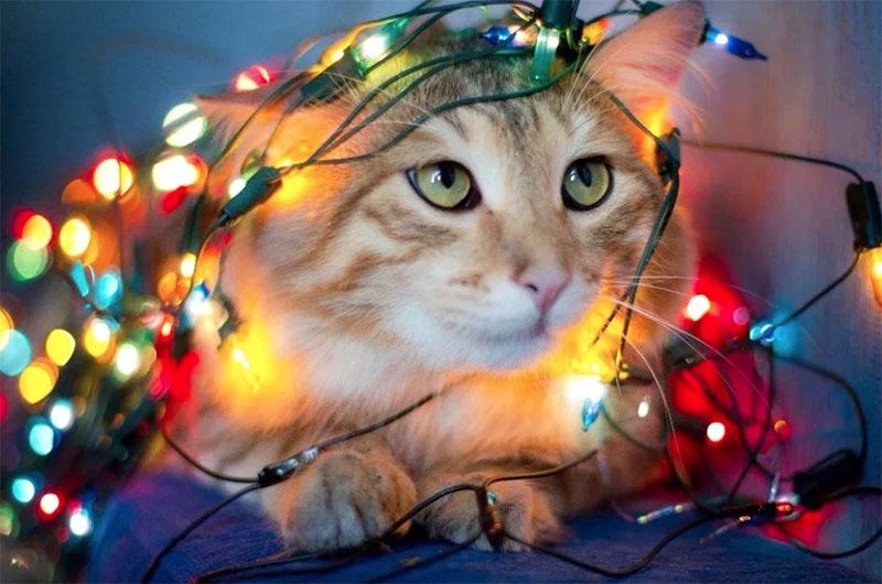Никогда не оставляете кошку наедине с включённой электрогирляндой