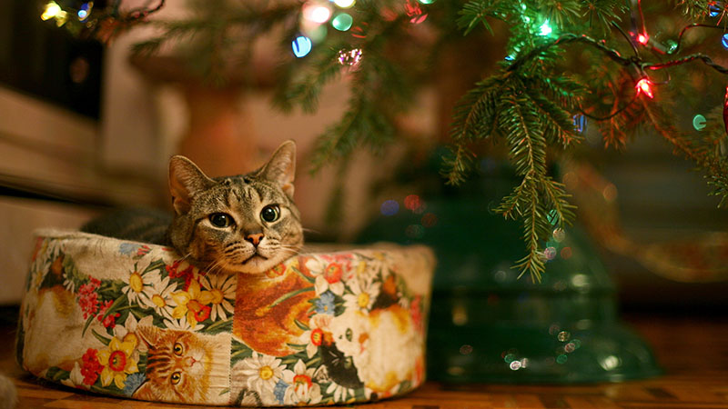 Отвлеките кошку от ёлки и поставьте рядом несколько коробок разного размера