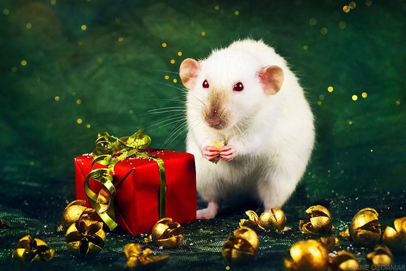 Белая Крыса очень любит подарки, особенно полезные