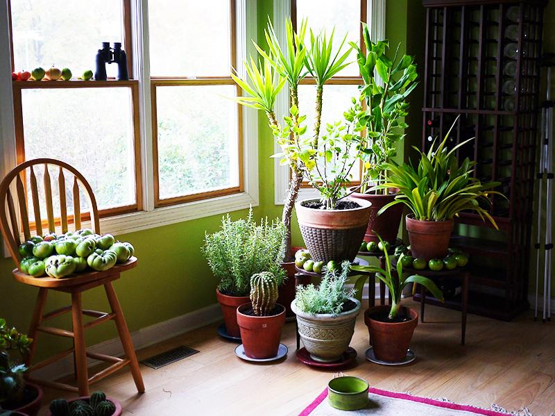 Приобретите небольшое комнатное дерево и несколько компактных растений – обстановка в доме сразу изменится в лучшую сторону