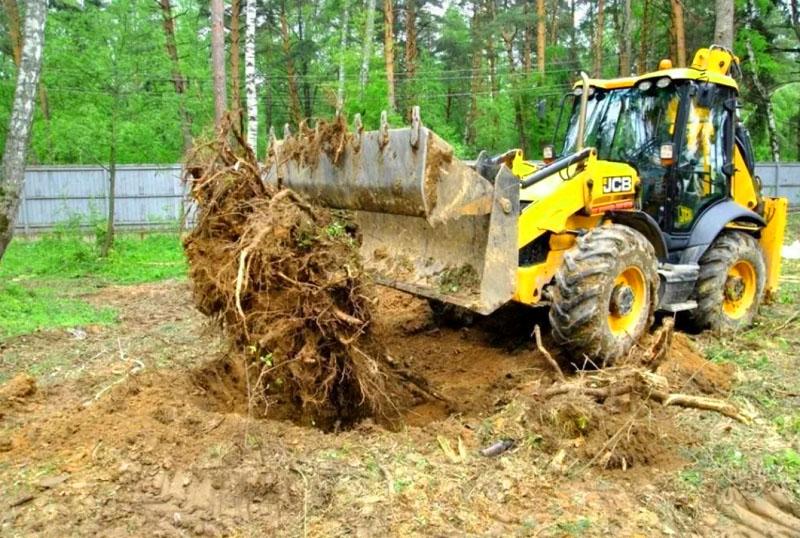 Если корни проросли слишком глубоко, а дерево очень старое, не пытайтесь выкорчевать его своими руками, используйте специальное оборудование или сельскохозяйственную технику