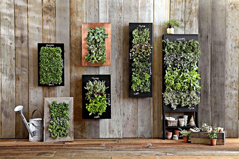 Выбирайте ёмкости под размер растения