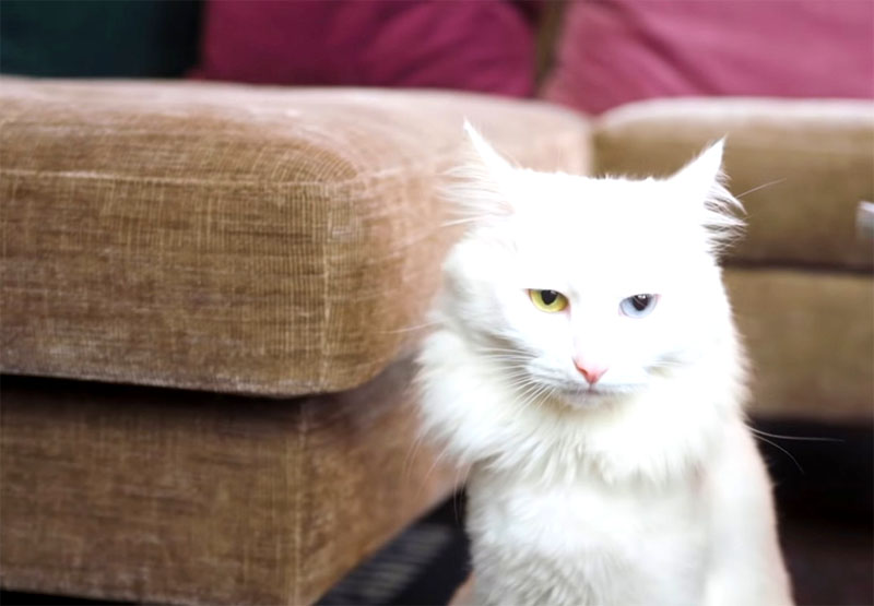 В квартире вместе с Владом живёт кот с разными глазами, которого стилист подобрал на помойке