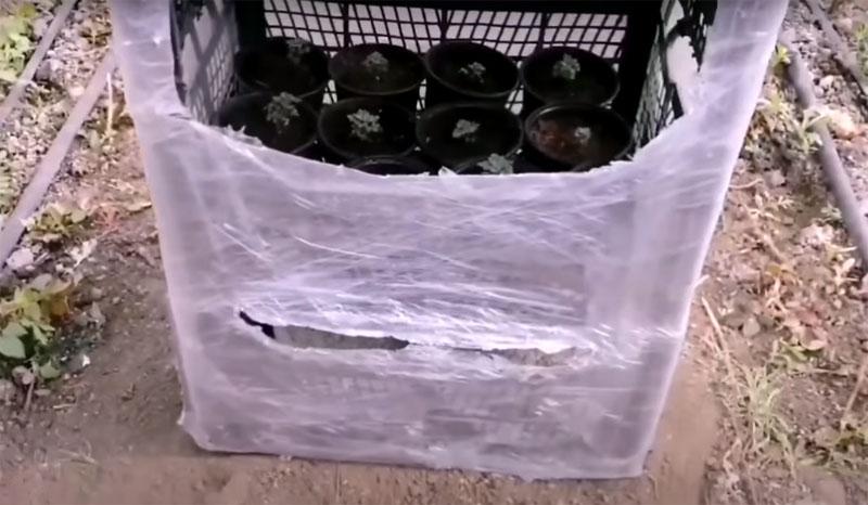 В каждую секцию многоярусного парника можно установить рассаду в стаканчиках или кассетах. Высота секции позволяет подобраться к растениям с лейкой