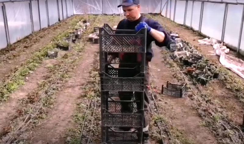 В таких высоких ячейках вам будет удобно ухаживать за растениями до высадки в грунт, даже если они вырастут довольно большими