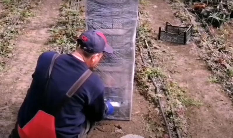 В самый нижний ящик нужно вложить утяжелители. Для этого в плёнке следует сделать прорезь и положить через неё внутрь камни или кирпичи. Нижний ярус в любом случае не пригодится вам для растений, потому что здесь будет слишком мало света