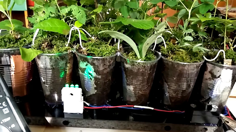 Когда провода подключены, можно наполнить стаканы землёй, высадить растения