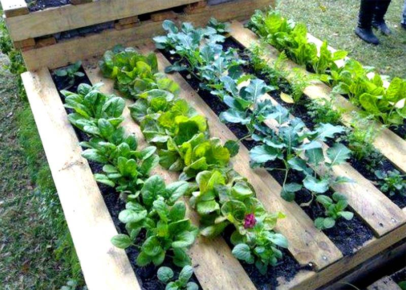 15 полезных лайфхаков для садовода во время самоизоляции
