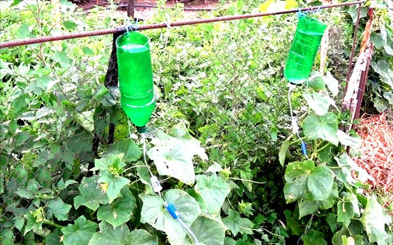 Очень просто сделать капельный полив из пластиковой бутылки и медицинской капельницы. Вы можете регулировать интенсивность увлажнения почвы