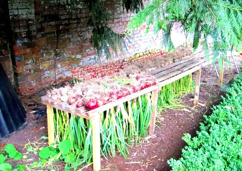 Для сушки лука подойдёт приподнятая решётка, на которую надеваются луковицы, как на фото. Кстати, вместо деревянной конструкции можно использовать обычную раскладную сушилку для белья