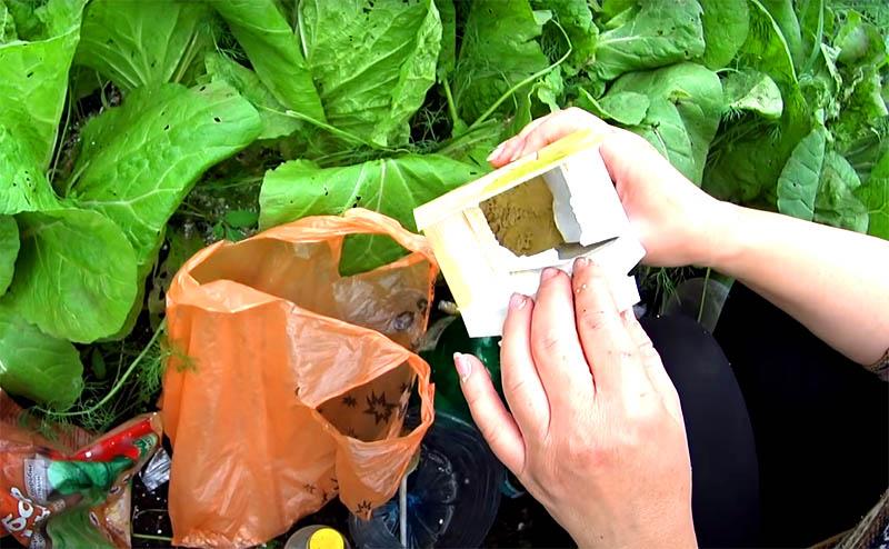 Как защитить растения от слизней без химии