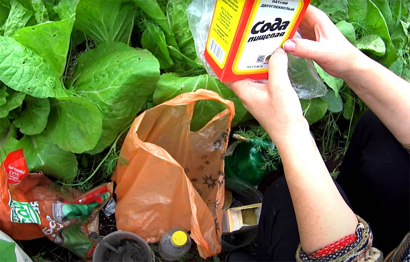 Хорошие результат показывает и опрыскивание раствором соды. И снова пропорции, которые легко запомнить: чайная ложка соды на литр воды. Крепче состав не делайте, потому что перечисленные средства могут обжечь молодые листья