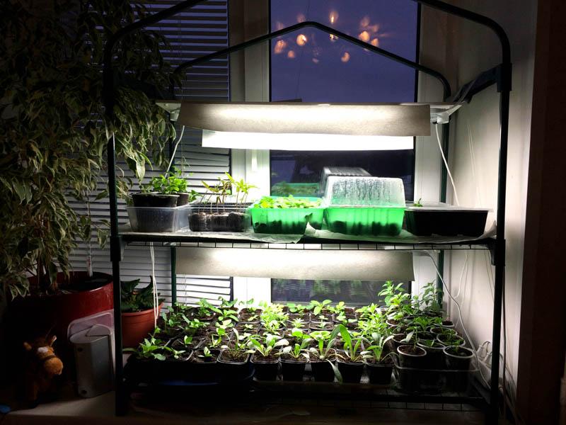Если вы не хотите закрывать парник целиком, надевайте на теплолюбивые растения пластиковые «колпаки»