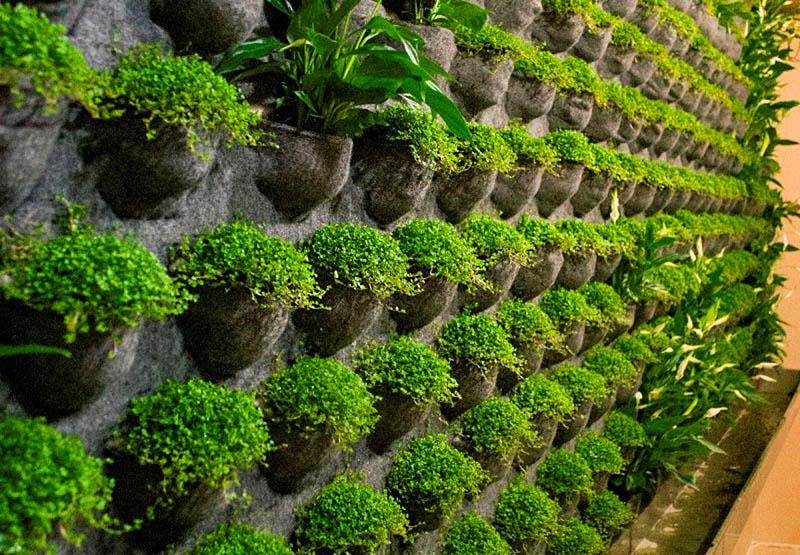 Зелёная стена из растений во всех случаях будет выглядеть хорошо, вам нужно лишь продумать и создать чёткую композицию. Не размещайте цветы беспорядочно − лучше, если они будут высажены ровными рядами