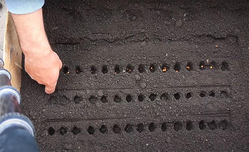 А теперь вы можете делать этим инструментом углубления для посадки мелких семян. Расстояния всегда будут одинаковыми, а работа займёт минимум времени