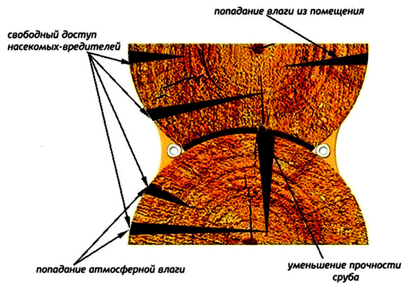 Причины, почему трещины в брёвнах нужно срочно заделывать