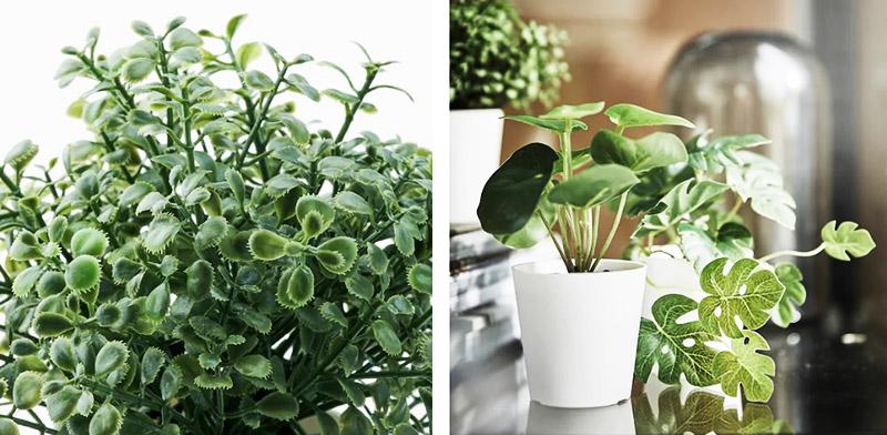 Товар продаётся набором из 3 растений, а диаметр кашпо составляет 6 см