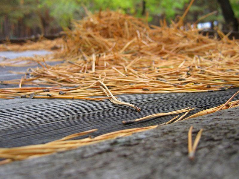 Заменить их может опавшая хвоя – если у вас неподалёку есть хвойный лес, собрать опад очень просто – главное, хорошо его просушить