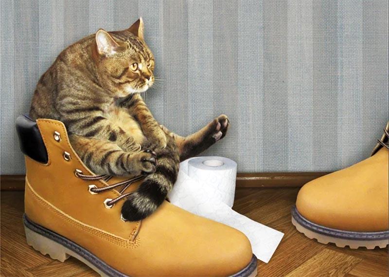 Как уберечь от кота обои в квартире