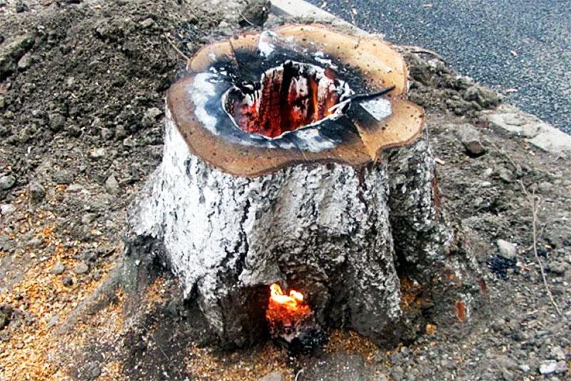 Пень будет гореть очень долго, весь день, но выгорит полностью