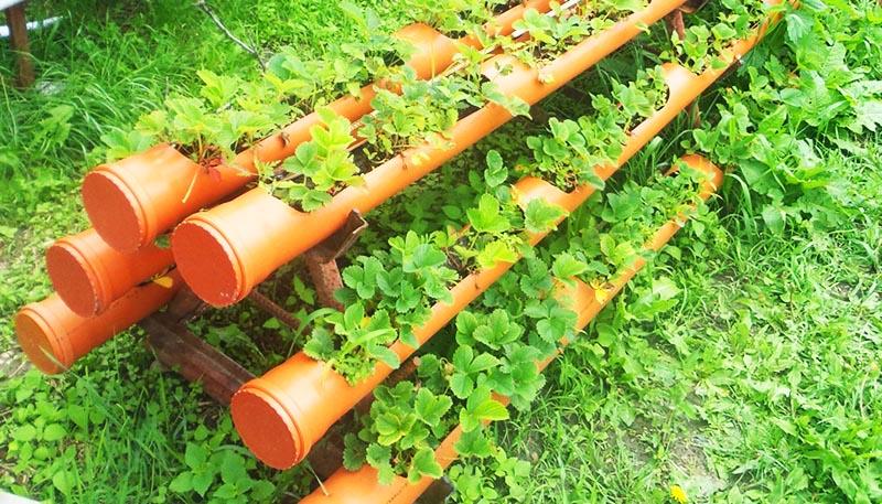 Пластиковые трубы в качестве грядок используются очень часто