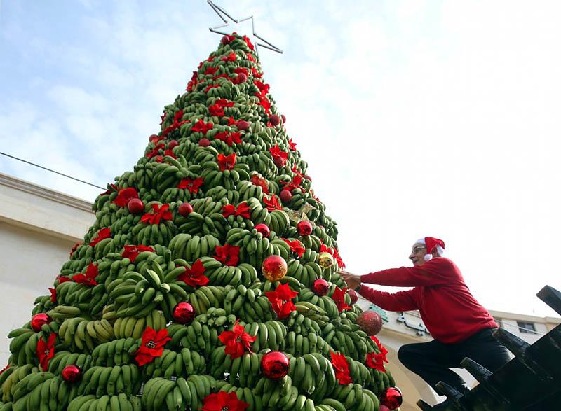 Пока идут новогодние праздники, бананы успеют поспеть и ёлка станет жёлтой