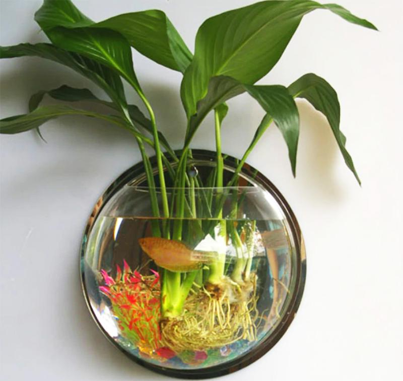 В таком аквариуме будет комфортно чувствовать себя одна небольшая рыбка