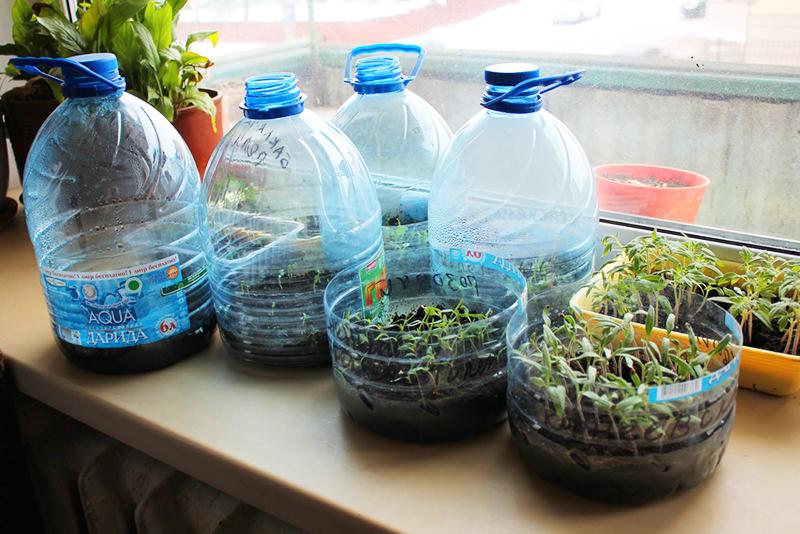 В этой таре удобно проращивать семена: просто накрыть ёмкость крышкой из той же бутылки − и получится мини-тепличка с влажным климатом