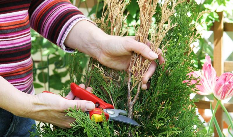 Как правильно реанимировать деревья и кусты весной