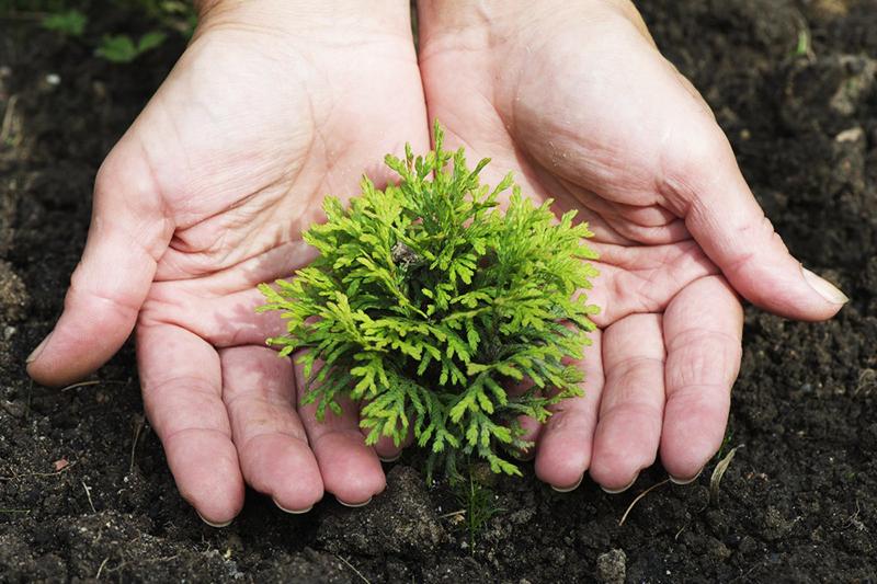 Важно вовремя оросить растение водой. Это поможет восполнить нехватку влаги