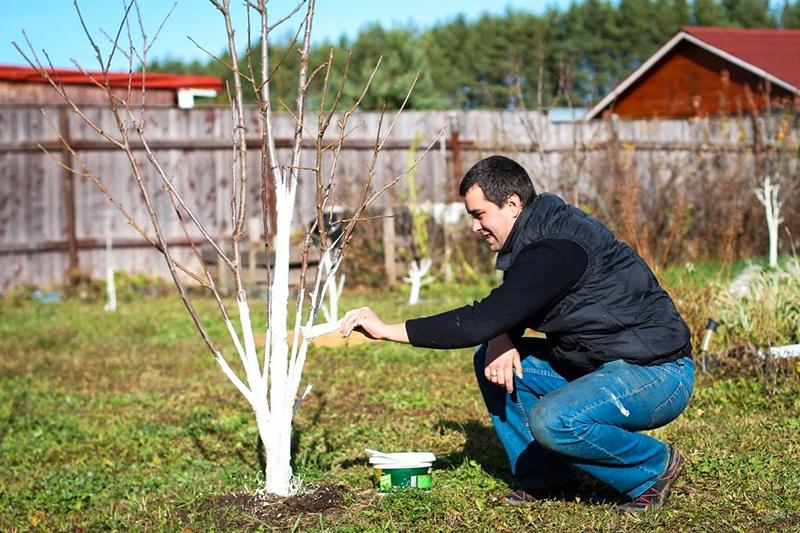 Для восстановления лиственных растений применяют те же меры, что и для хвойных: антистрессовые препараты чередуют с минеральными удобрениями