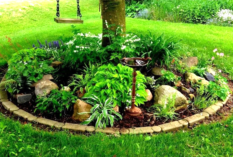 Под тенью дерева будут хорошо себя чувствовать декоративные лиственные растения, например хосты