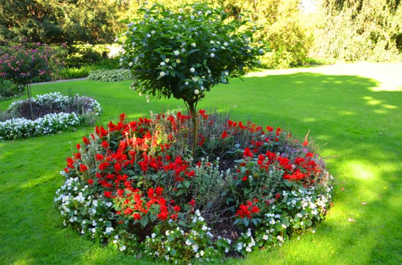 Цветущим растениям нужно больше солнца, так что хорошо они будут чувствовать себя только у небольших деревьев